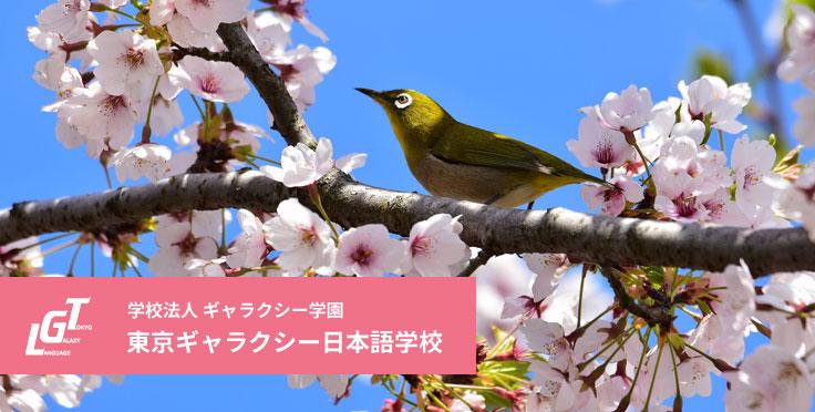 留学の目的を達成することができる東京ギャラクシー選択科目案内