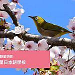 能夠實現留學目標的東京銀星日本語學校的選修課程的介紹